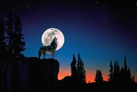 Los Lobos Aúllan A La Luna Y Conoces El Origen De La Croqueta