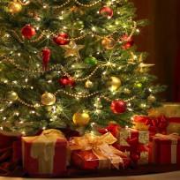Por-qué-el-pino-es-el-árbol-de-la-navidad-1
