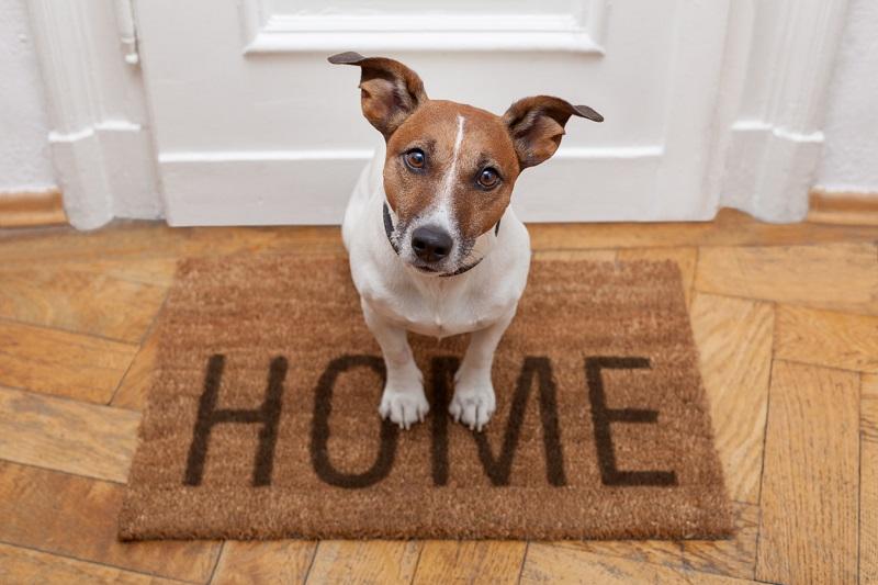perro felpudo entrada casa