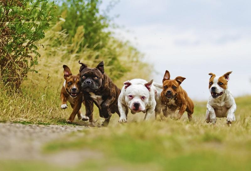 perros corren por el campo