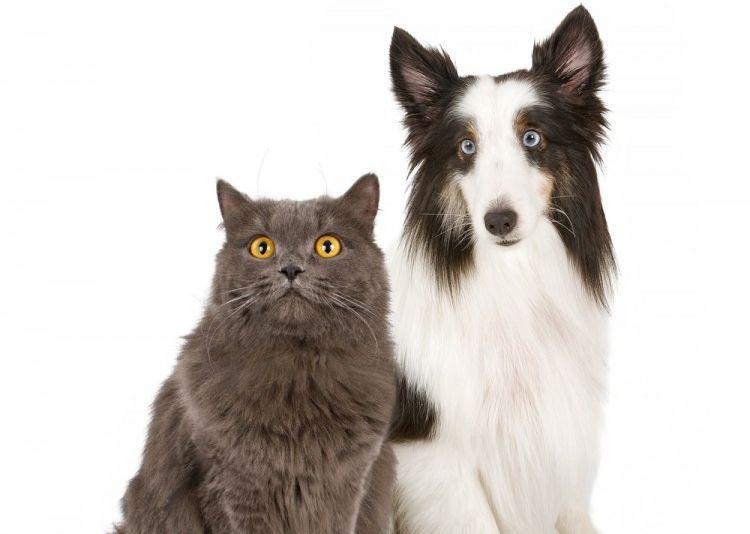 personalidad perros y gatos