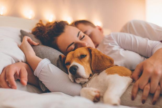 Si duermes con tu mascota, tu sueño es más profundo