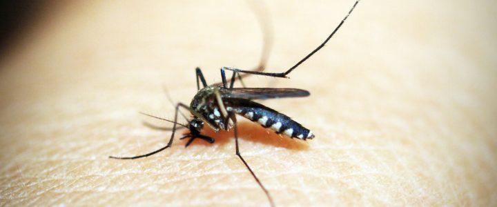 Consigue que no te frían los mosquitos