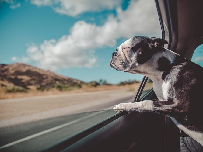 perro-ventanilla