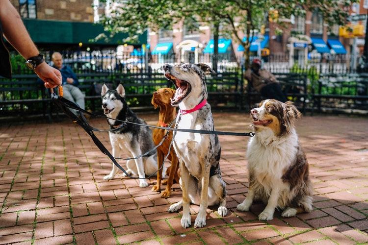 perros-socializando