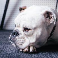 perro-inclina-cabeza