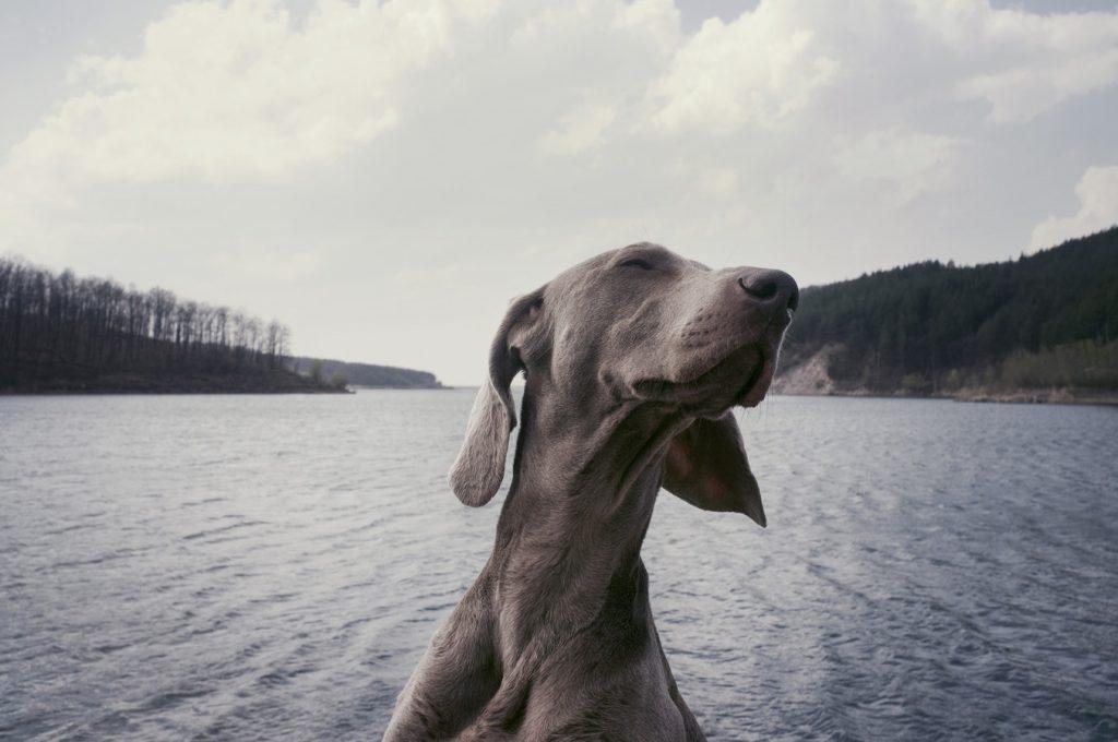perro-oye-mejor