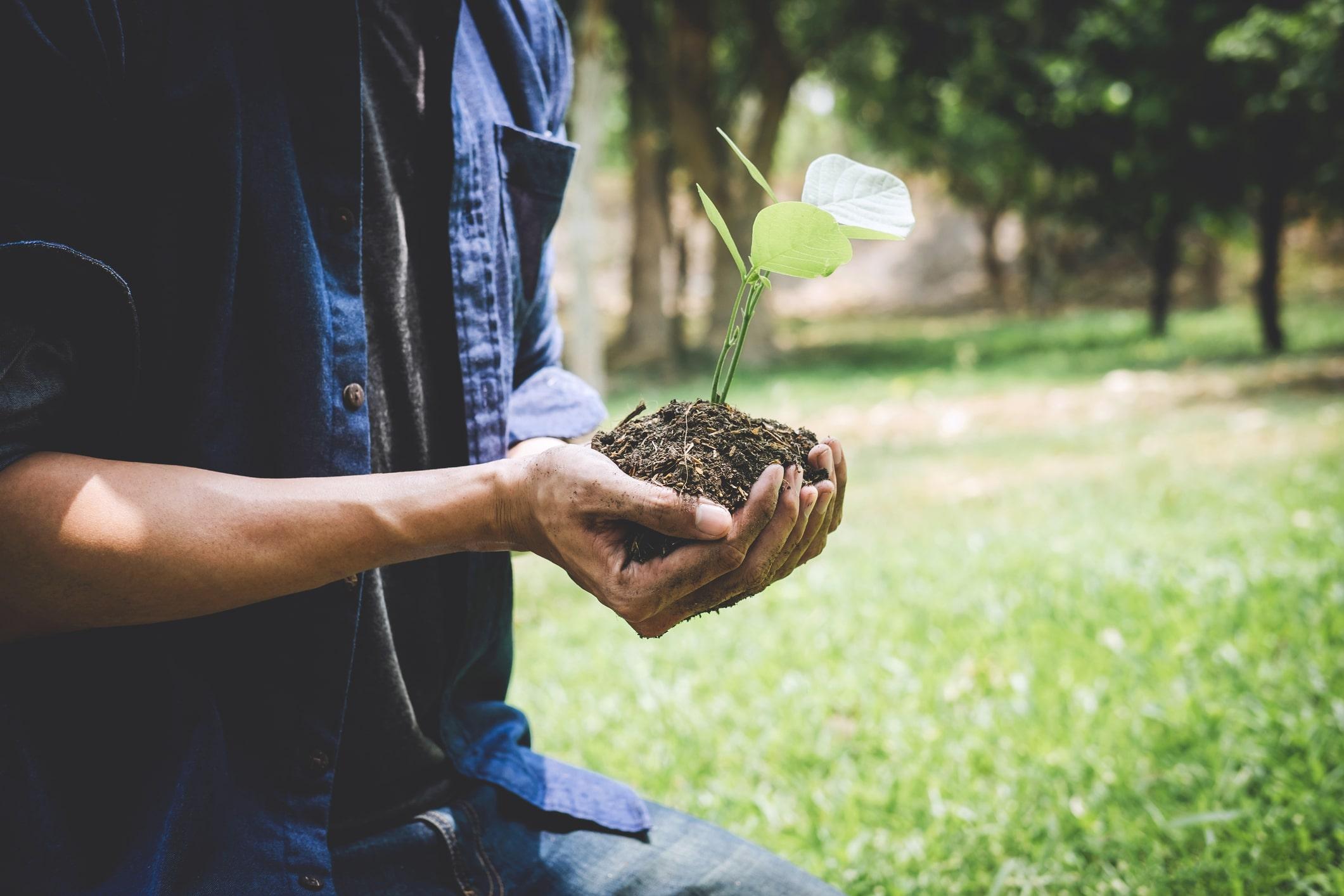 Descubre que su planta era artificial tras dos años regándola