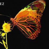 pablo lópez mariposa nuevo sencillo música español