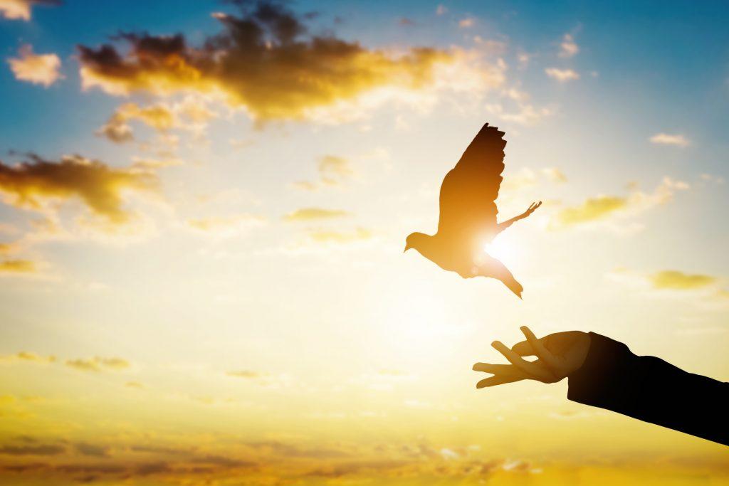 """El peligroso conformismo que esconde el refrán """"más vale pájaro en mano que ciento volando"""""""