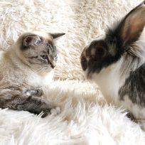 Un gato comienza a actuar como un conejo tras convivir con dos de ellos