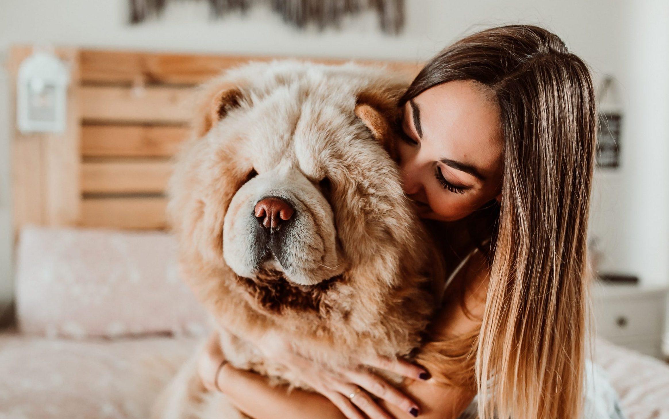 perros perro ropa amor