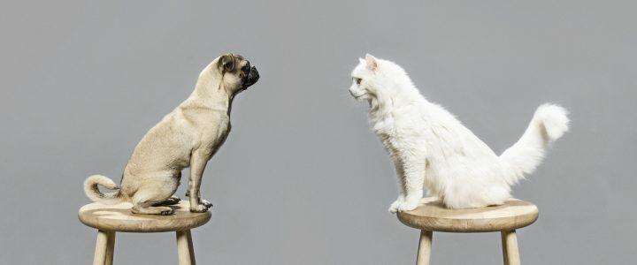 perros gatos dueños personalidad