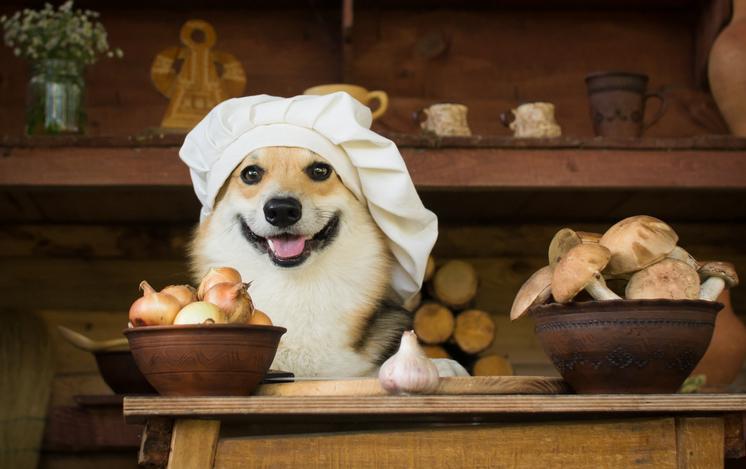 perros comida recetas gorro chef