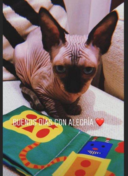 Pepe gato de Cristiano Ronaldo