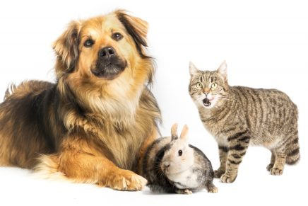 perro, gato y conejo