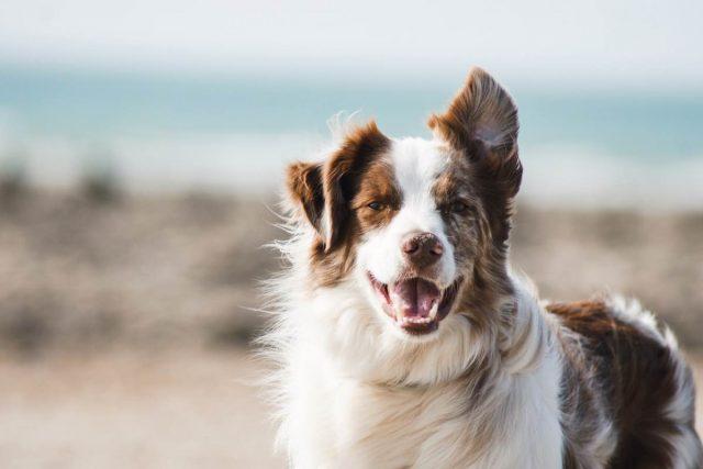 perro picadura